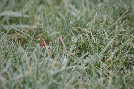 Frosty grass before the snow arrived!